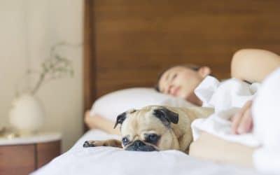 Mindfulness en slapeloosheid